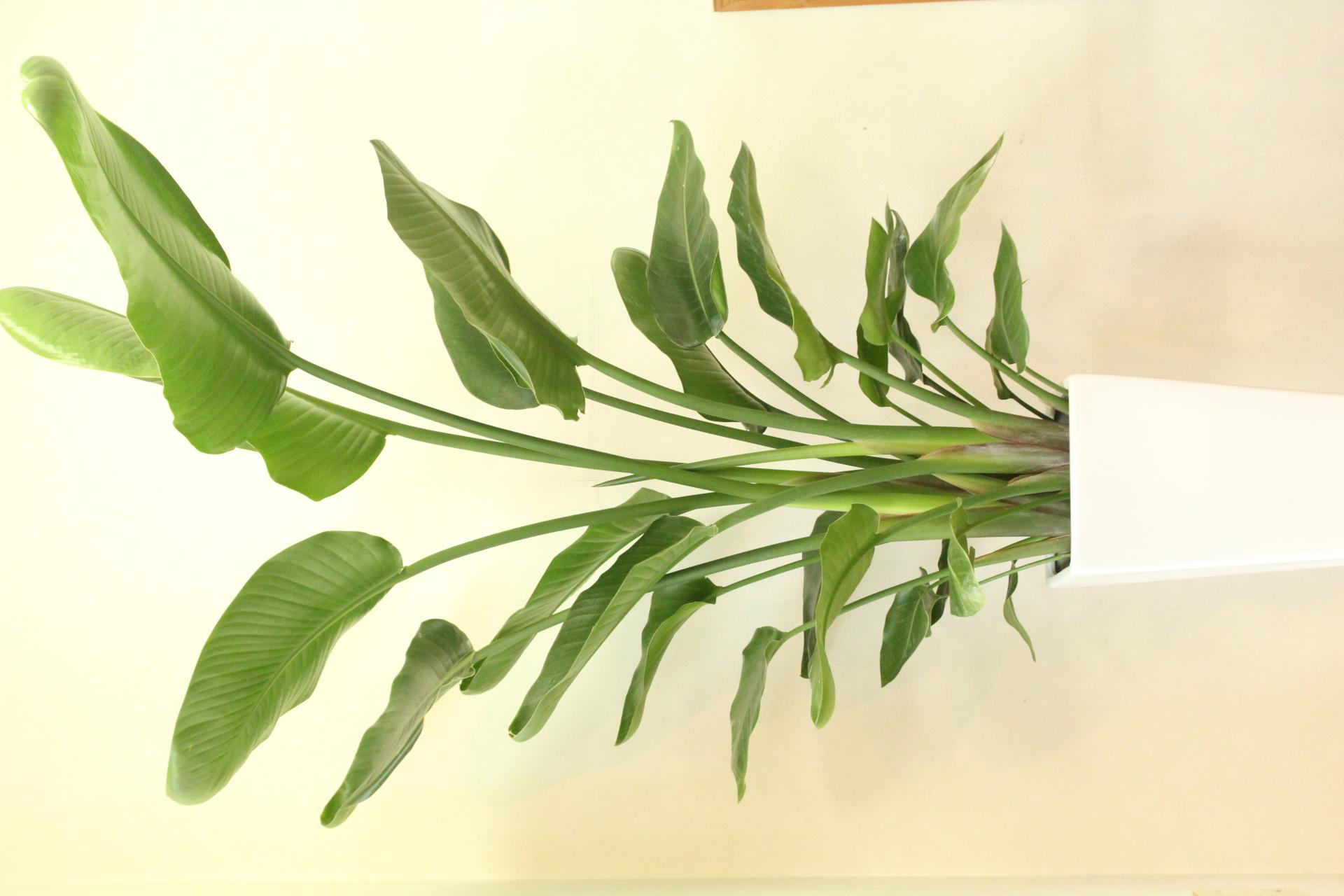 観葉植物詳細